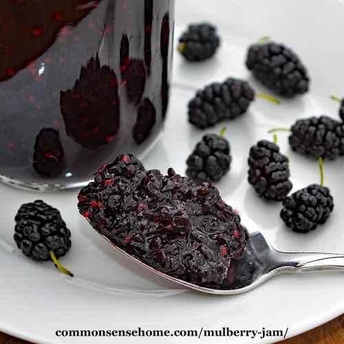 Medium Of Mulberry Vs Blackberry