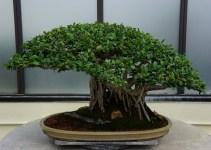 Como plantar cactus y cuidados como plantar for Como cultivar bonsais