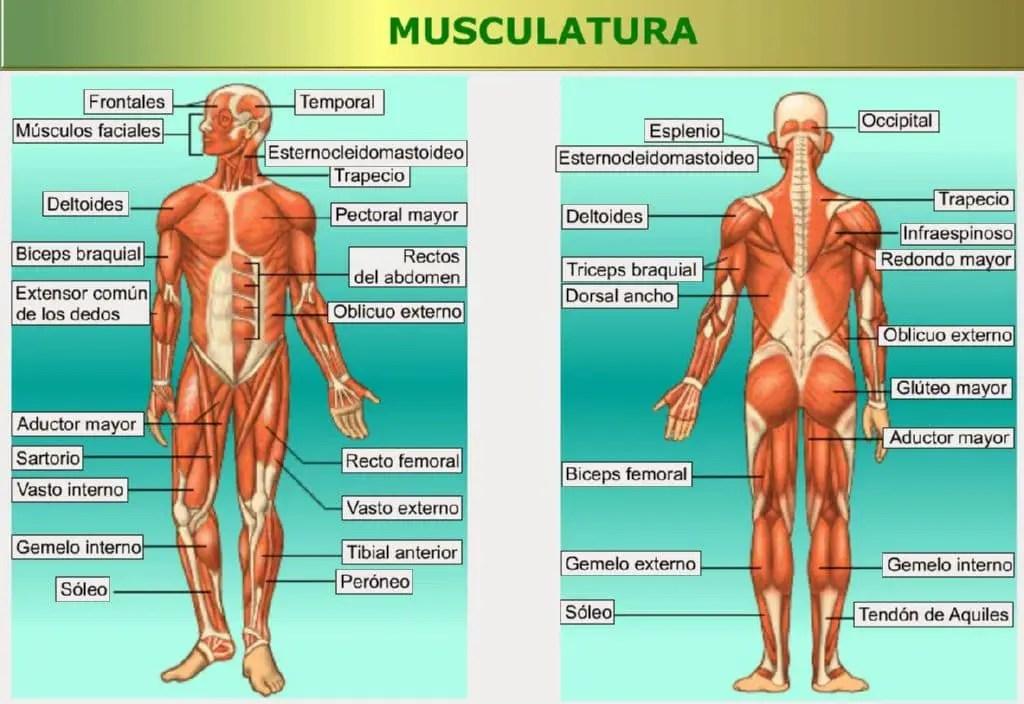 La osteocondrosis el ejercicio el puente