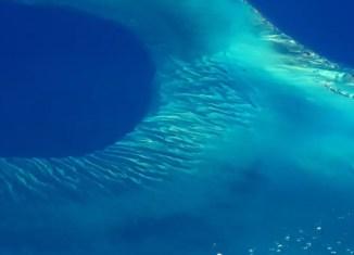 silbido en el mar caribe