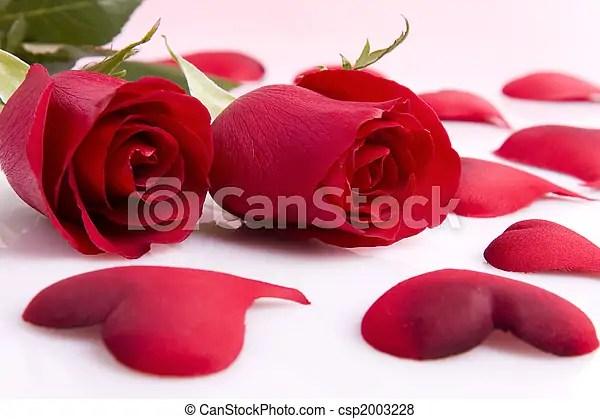 Rosas, y, corazones Rosa, aislado, dos corazones, rojo blanco - rosas y corazones