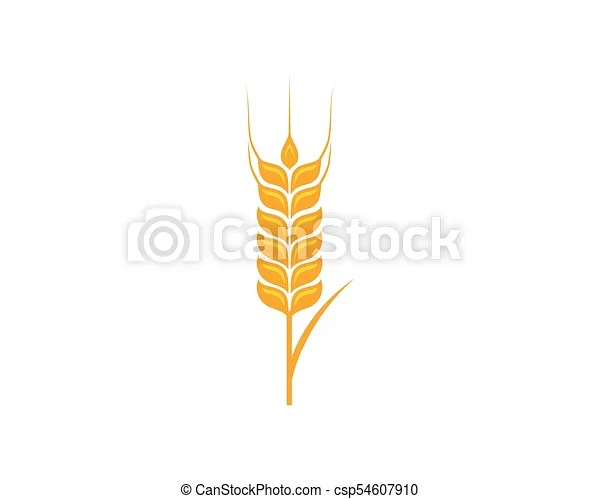 Agriculture wheat template vector icon design illustration - wheat template