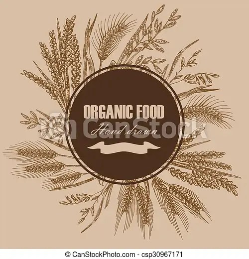 Bakery design template hand drawn wheat background vector - wheat template