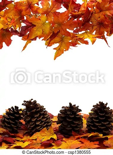 Fall harvest border Fall leaves with pinecones on white background