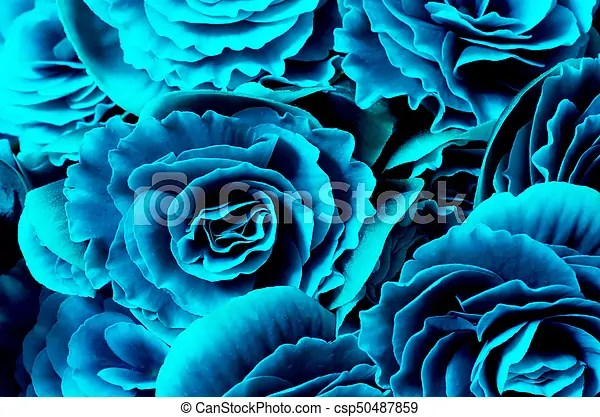 Flower background, blue begonias, symbol of love and desire for