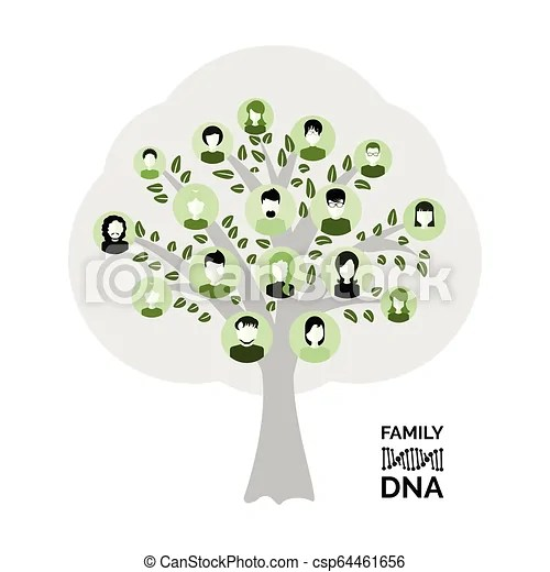 Genealogy tree for dna ancestors illustration isolated