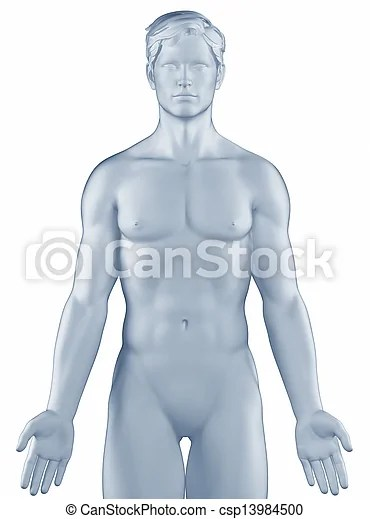 Man in anatomical position isolated - anatomical position