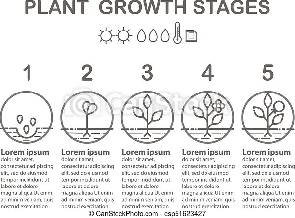 Plant growth stages infographics line art icons planting