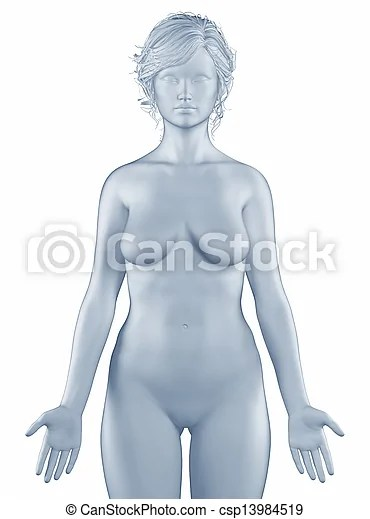Woman in anatomical position isolated
