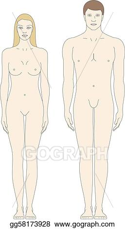 Vector Illustration - Male and female body templates Stock Clip Art