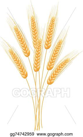 EPS Illustration - Ripe ears wheat set isolated detailed template - wheat template