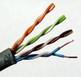 Cat UTP Cable