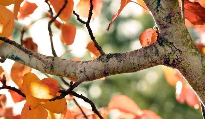 Fall Leaves Wallpaper For Desktop 191 Qu 233 Es Rama Su Definici 243 N Concepto Y Significado