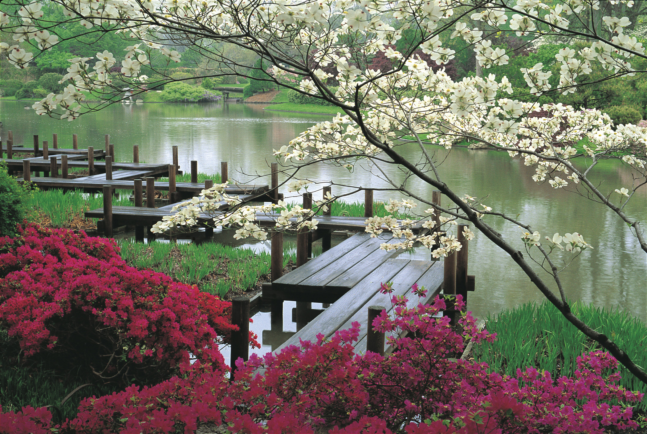 Japanese chinese gardens