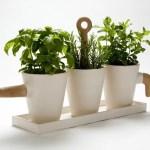Iva su basilico ed erbe aromatiche: aumento dal 23 luglio