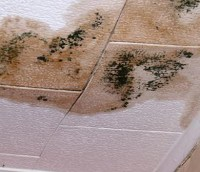 Water Damage In Ceiling Mold   Taraba Home Review