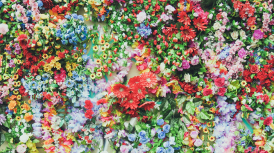 unsplash flowers