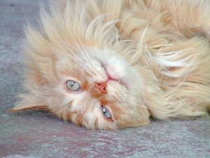 The well adjusted cat feline behavior advice