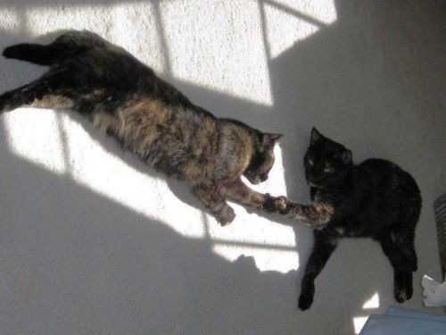 cat-to-cat-introductions