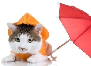 cat in the rain with umbrella
