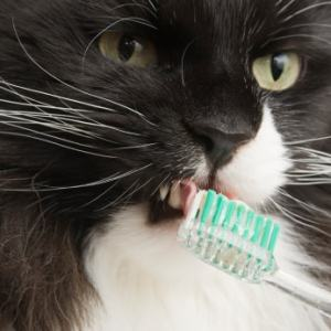 brushing your cat's teeth