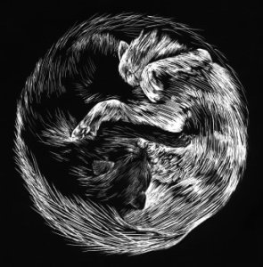 yin yang cats acupuncture chinese medicine