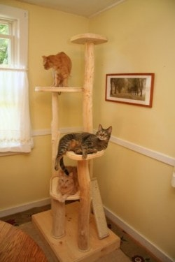 cat-tree-Jackson-Galaxy-recommends