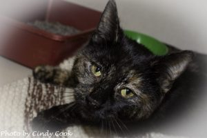 rescued tortoiseshell cat NomNom