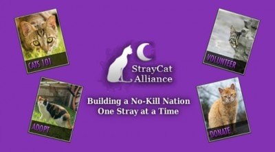 Stray Cat Alliance