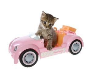 cat_in_car