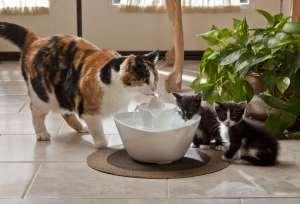 Drinkwell_Lotus_Pet_Fountain