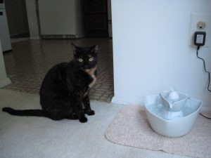 Allegra with Drinkwell pet fountain