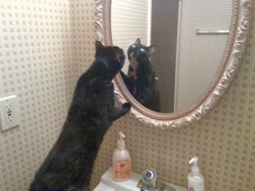 cat_looking_into_mirror