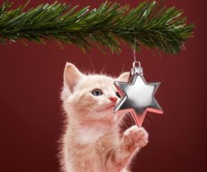 holiday hazards for cats
