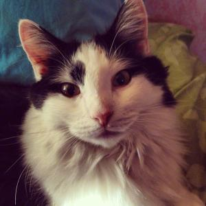 Food Allergies In Cats The Conscious Cat