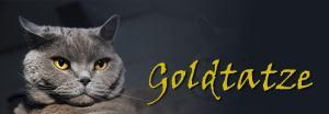 Goldtatze