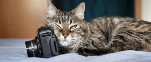 cat_marking_behavior