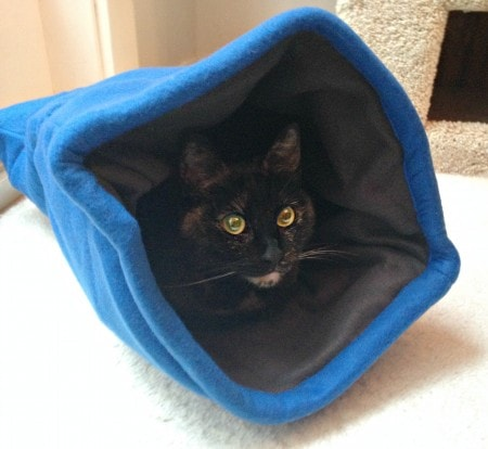 Review comfy clamshell from the jackson galaxy collection for Petmate jackson galaxy