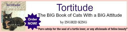 Tortitude banner for posts with border