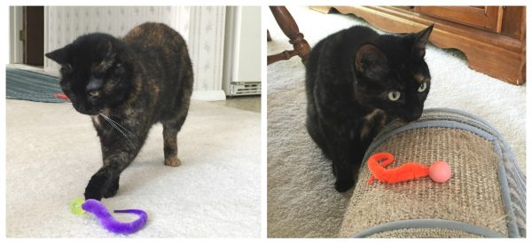 wiggly-cat-toy
