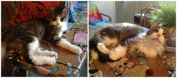 Zazu, after he was first rescued, and today