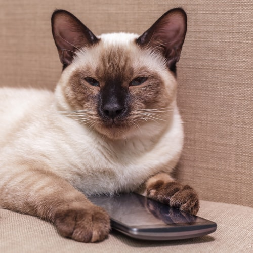 cat-with-phone