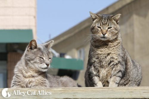 alleycatallies_boardwalkcatsproject-1