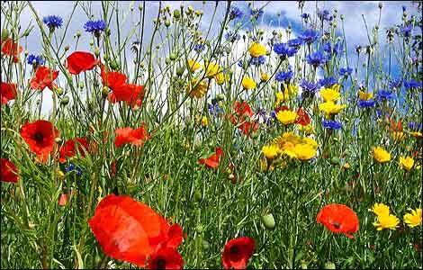 Summer Wild Flower Garden Pics