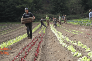 The Zen of Organic Farming