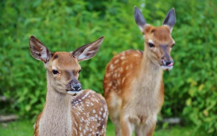 roe-deer-1240x700
