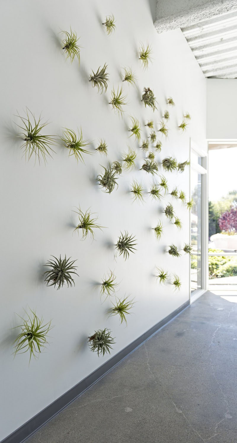 Air Plant Wall Holder 6 Creative Ideas For Displaying Air Plants In Your Home Contemporist