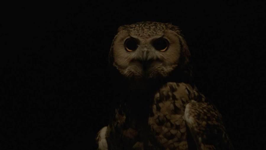 image-2-owl-petrified