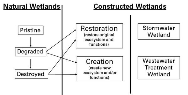 Natural and Constructed Wetlands in North Carolina An Overview for