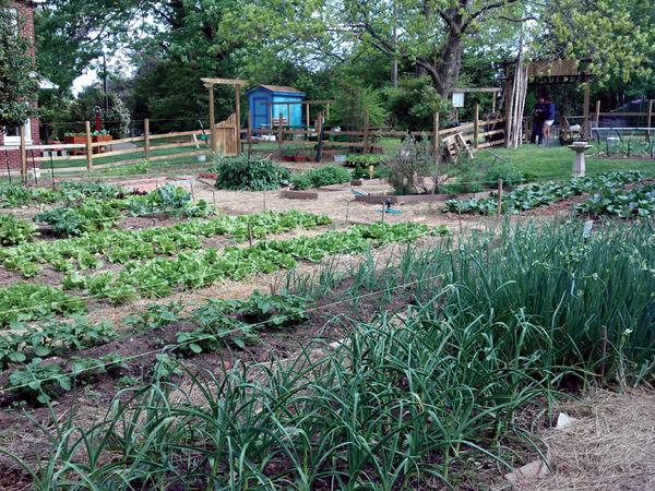 Vegetable Gardening A Beginner\u0027s Guide NC State Extension